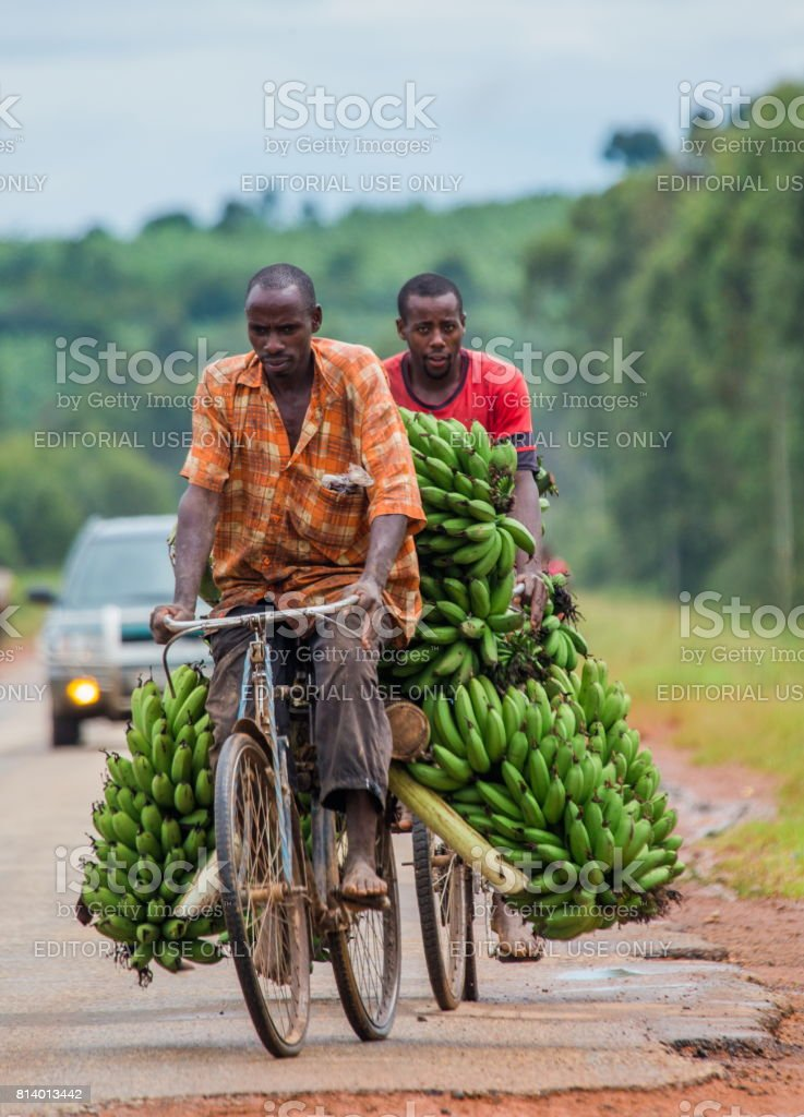 The young man is lucky by bicycle on the road a big linking of bananas to sell on the market. May 10, 2013. Kisoro. Uganda. Africa. stock photo