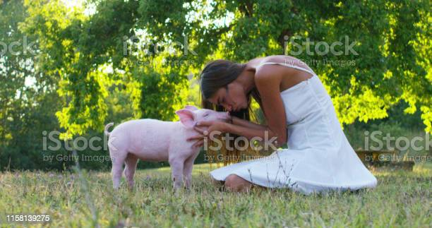 The young woman caresses and kisses pig piglet on a green meadow picture id1158139275?b=1&k=6&m=1158139275&s=612x612&h=rwwj3wfffajzhe77razykodpuzgdkgg1xgbxgohnyom=