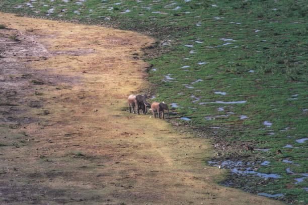 Les éléphants de Thé dans le parc national Amboseli - Kenya, Afrique - Photo