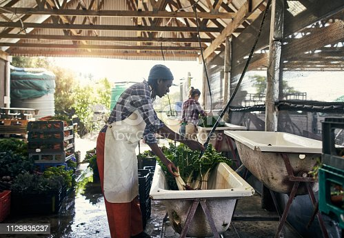Shot of a young man rinsing off freshly picked vegetables on a farm