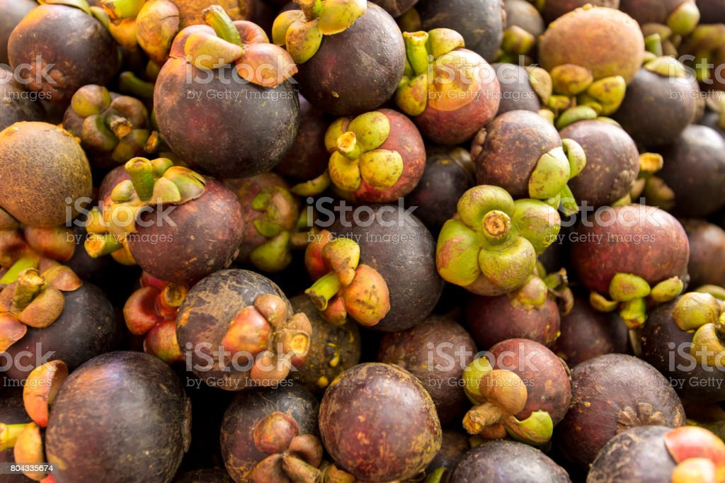 Thepurple mangosteenis queen of Thai fruits is sweet and tangy, juicy, somewhat fibrous, with fluid-filled vesicles , with an inedible, deep reddish-purple colored rind (exocarp) when ripe. stock photo