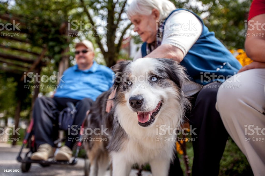 Therapeutic Dog Among Seniors in Retirement Community stock photo