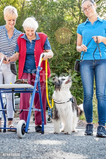 istock Therapist With Trained Dog Helping Senior Woman With Mobility Walker To Have A Short Walk 874413500