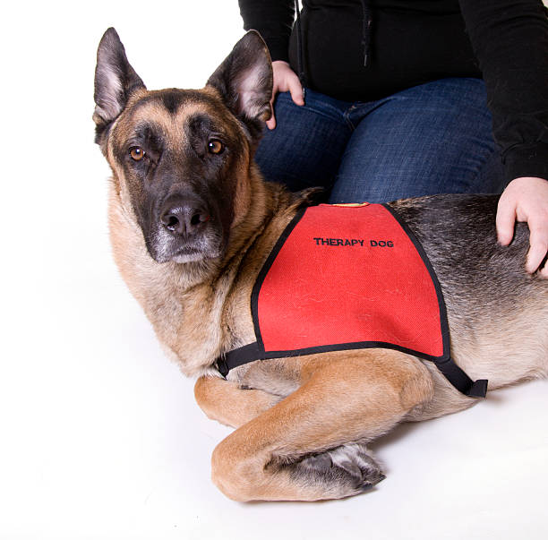 Therapy Dog stock photo