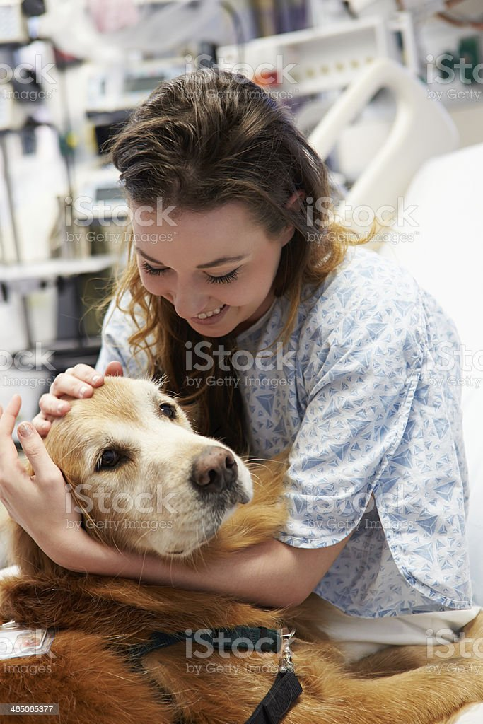 A therapy dog visiting a smiling patient in hospital stock photo