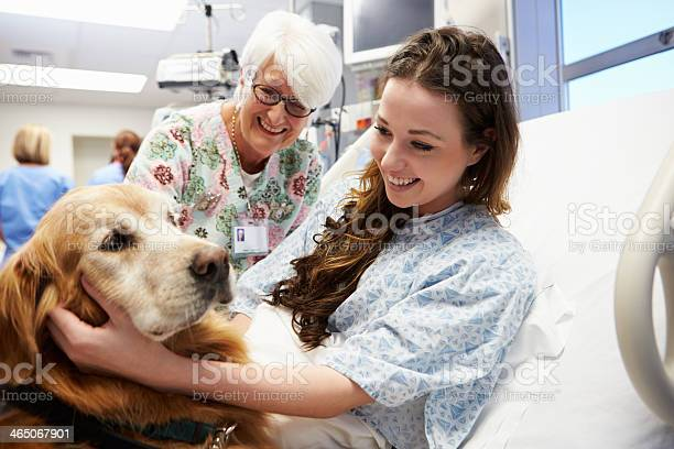 Therapy dog visiting young female patient in hospital picture id465067901?b=1&k=6&m=465067901&s=612x612&h=2hmnm9u21ikoqbekk785jtxe3kfnpgvkhu9rmo0vtuo=