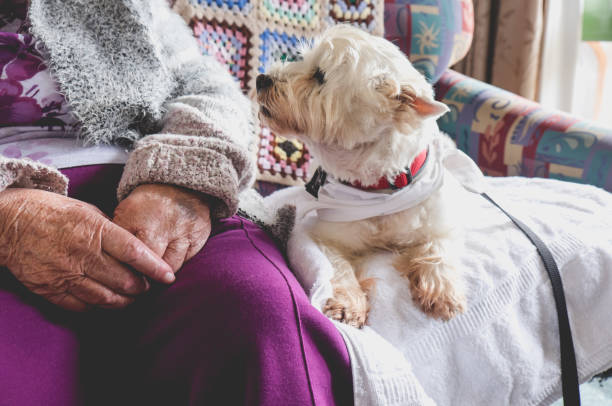 Therapy pet dog on couch next to elderly person in retirement rest home for seniors stock photo