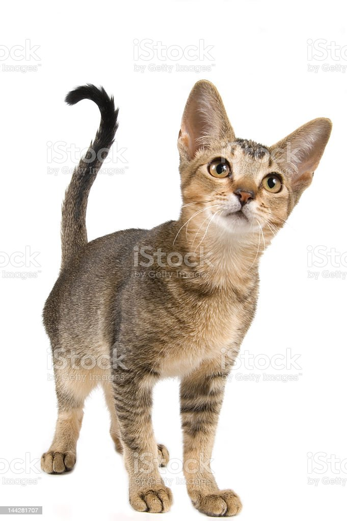 There is a cute kitten in the studio stock photo
