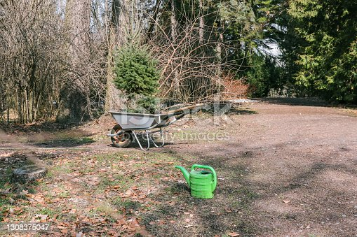 istock There is a green watering can and a garden wheelbarrow with a Christmas tree sapling in the park 1308375047