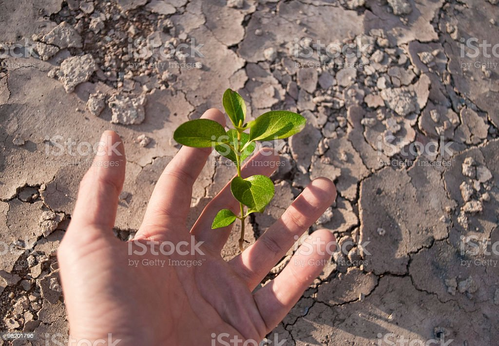 there is a plant! royalty-free stock photo