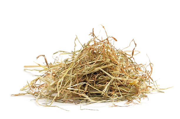"Hay ""Small pile of hay, isolated on awhite background."" hay stock pictures, royalty-free photos & images"