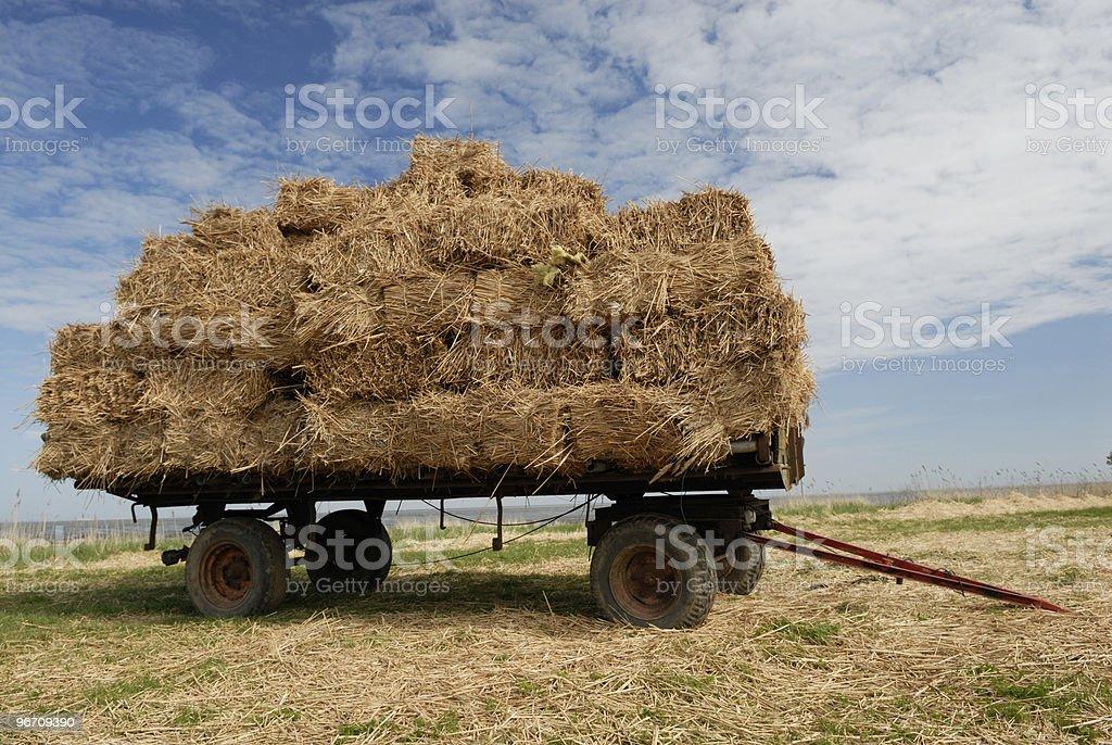Hay royalty-free stock photo