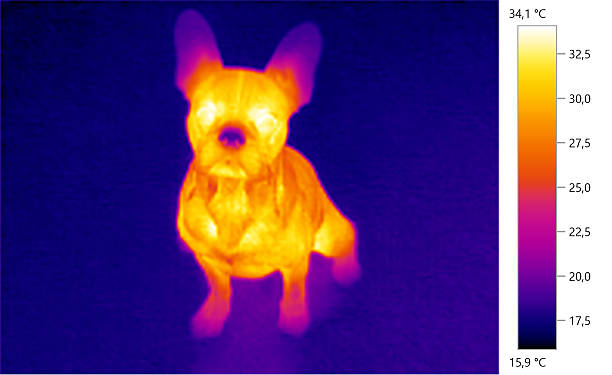 Thermal image photo, french bulldog, dog, color stock photo
