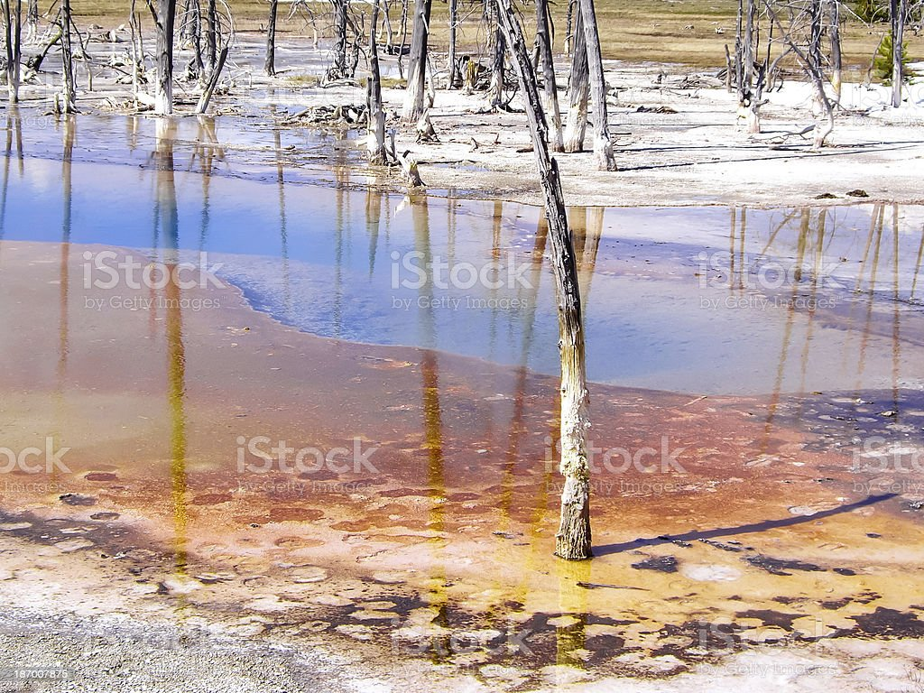 Thermal pool with dying trees stock photo