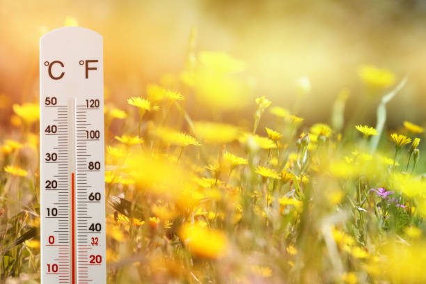 thermometer at field of flowers indicating weather change – zdjęcie