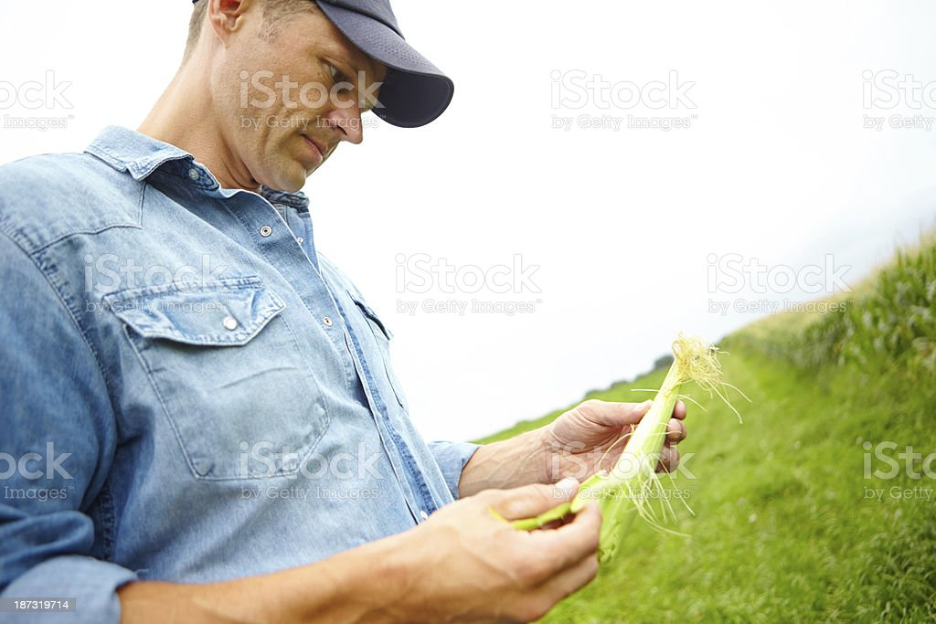 These crops are looking good... royalty-free stock photo