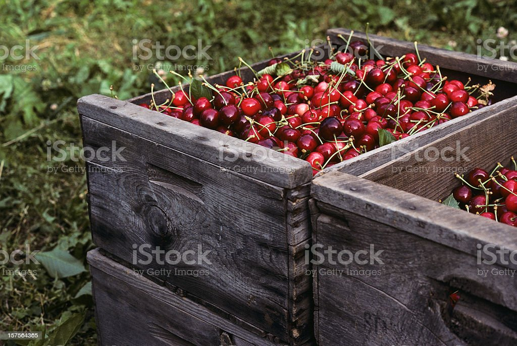 Bing Cherries in Wooden Boxes royalty-free stock photo