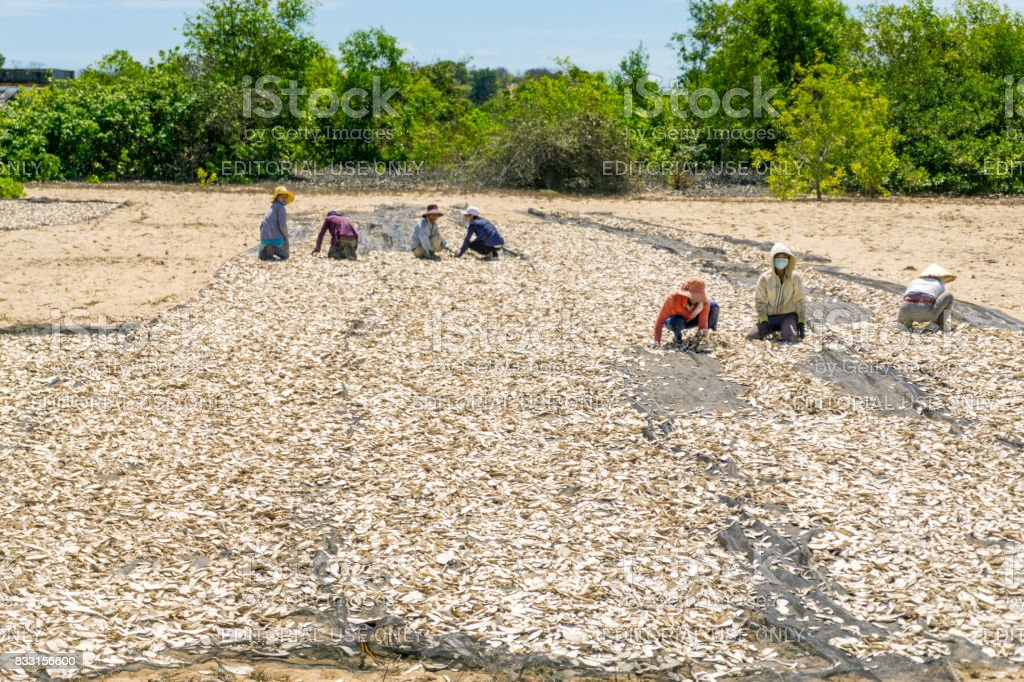 These people drying fishes stock photo