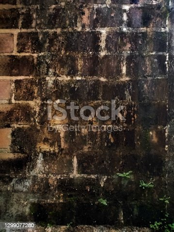 the walls are made of moldy bricks and overgrown with various kinds of moss because it is moist.
