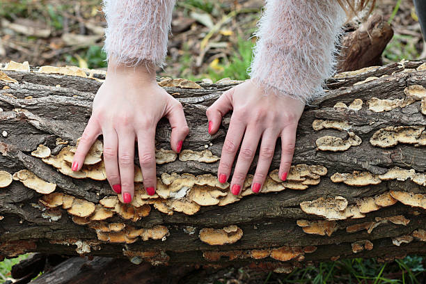 bracket fungus on willow latvian tree girl outdoors - whiteway latvian outdoor girl stock photos and pictures
