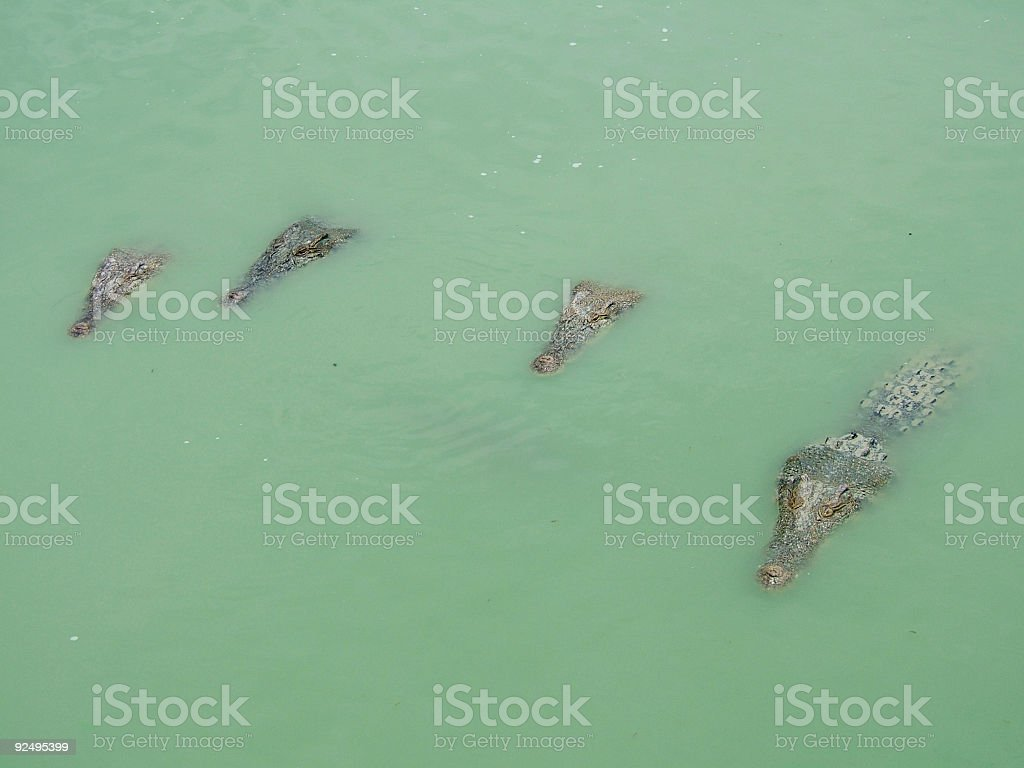 They are waiting for You :) royalty-free stock photo
