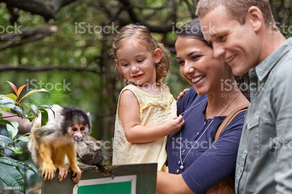 They finally understood the theory of evolution.... stock photo