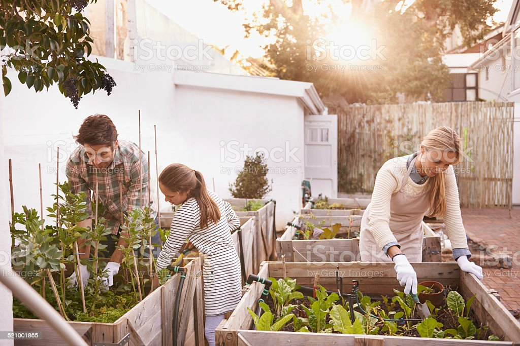 They have a love for growing things stock photo