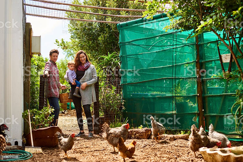 They love free range eggs and organic produce stock photo