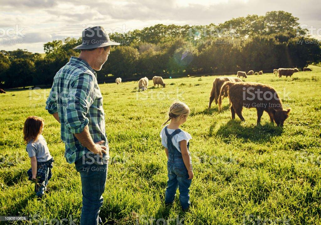 Sie lieben alle Tiere grasen beobachten – Foto