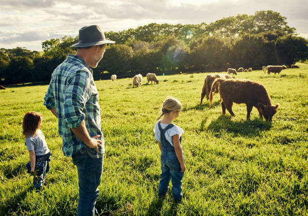 They love watching all the animals graze Shot of a father and his two little children watching over cattle on a farm dairy farm stock pictures, royalty-free photos & images