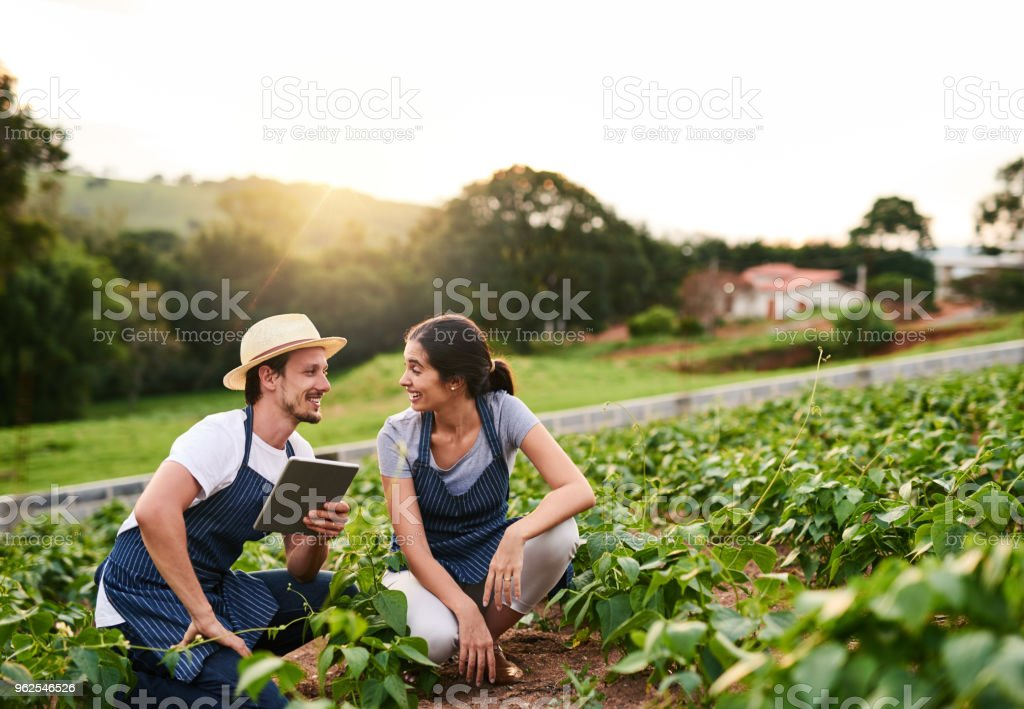 Eles trabalham nesta fazenda juntos - Foto de stock de Adulto royalty-free