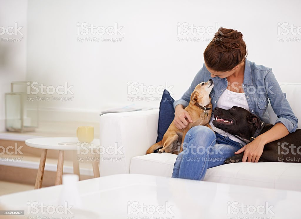 They're her canine companions stock photo