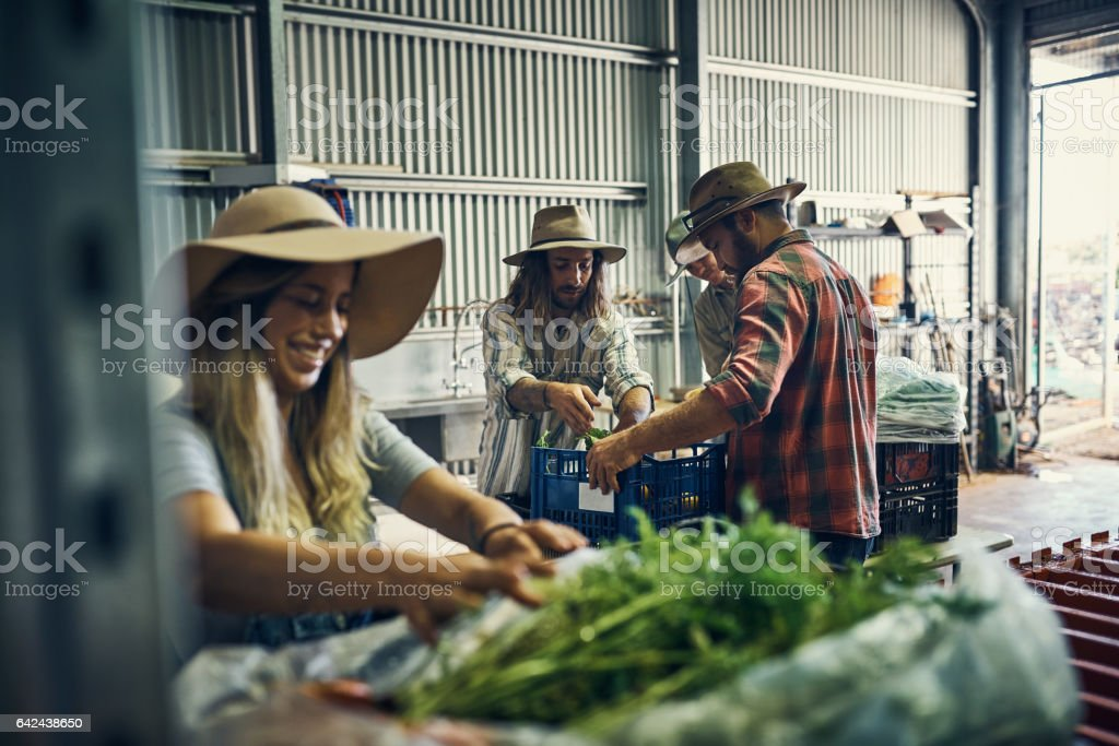 They've had a great harvest so far stock photo