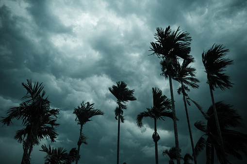 Thick dark black heavy storm clouds covered summer sunset sky horizon. Gale speed wind blowing over blurry coconut palm tree before Norwesters Kalbaishakhi Bordoisila thunderstorm torrential rain.