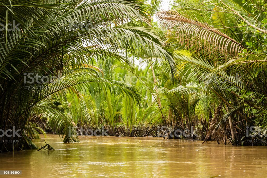 Thick jungle in Mekong delta, Vietnam stock photo