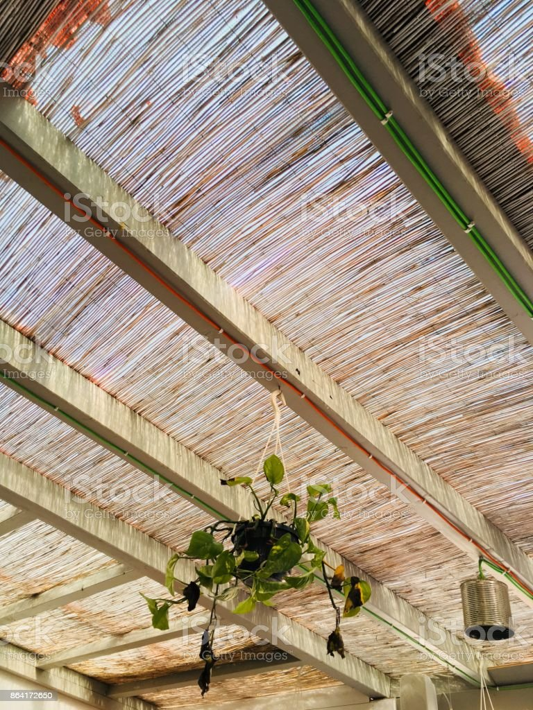 Thicket cane ceiling with hanging plant royalty-free stock photo