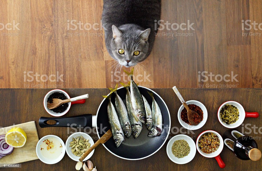 Thief cat looking fishes on the frying pan stock photo