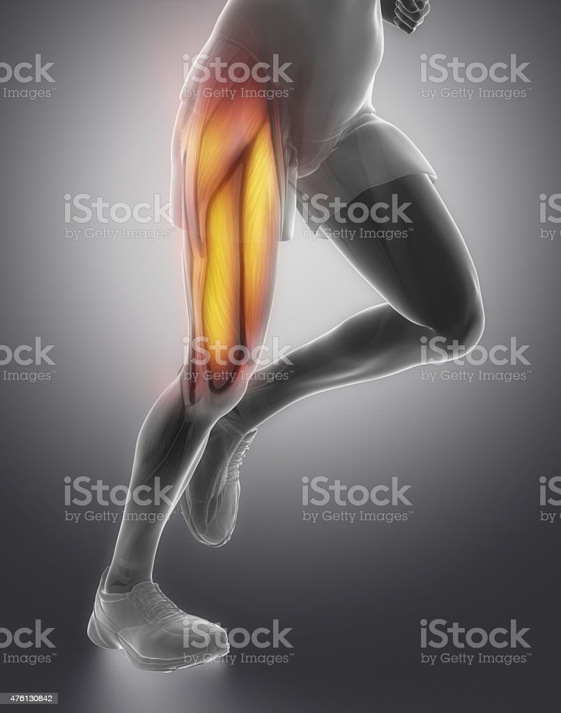 Thigh man muscle anatomy stock photo