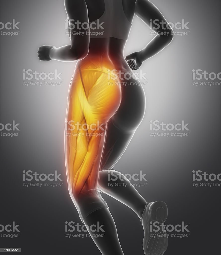 Thigh muscle female anatomy stock photo