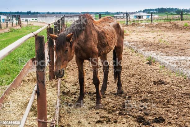 Thin big horse picture id992864608?b=1&k=6&m=992864608&s=612x612&h=mhgxbv zi3er4ix7jwg4g6u a0nsgfajpkqcopq9vzy=