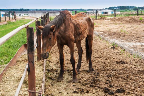 Thin big horse picture id992864608?b=1&k=6&m=992864608&s=612x612&w=0&h= pawzznz9sef9b8dkfuwj4b rfrlu2sr2ooobpefbco=