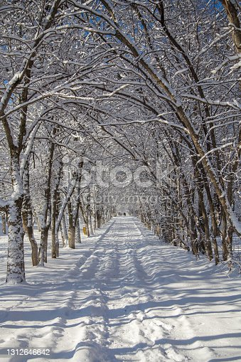 istock Thin branches of trees bent over the path 1312646642