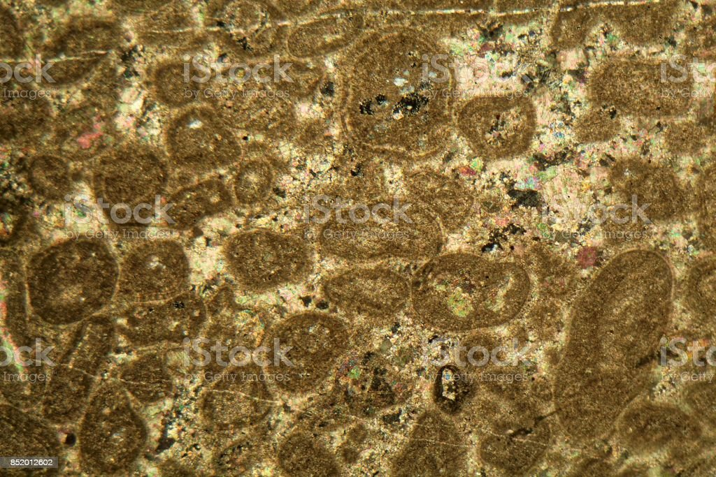 Thin section of a particle limestone under the microscope stock photo
