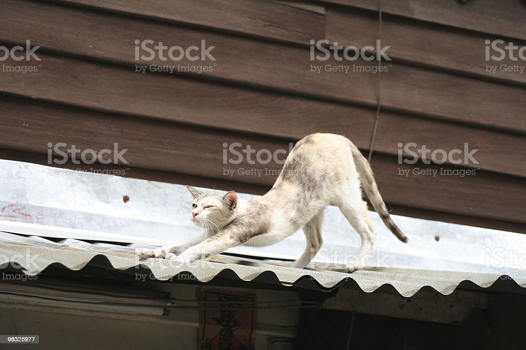 Thin stray cat stretching on tin roof royalty-free stock photo