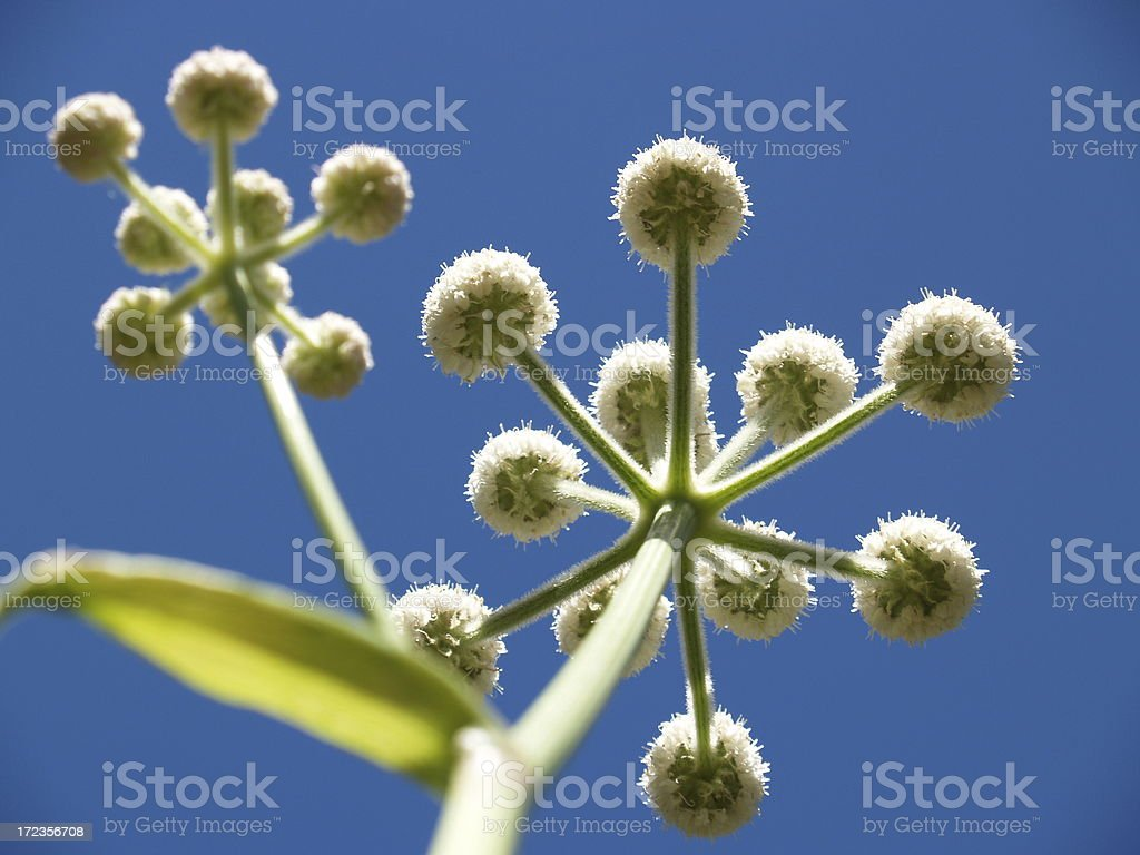 Things Are Looking Up royalty-free stock photo