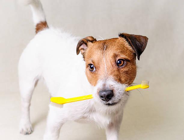 pensez à dents de chien de remise en forme - dents des animaux photos et images de collection