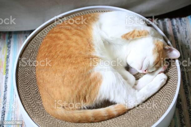 Thinking cat picture id1056607960?b=1&k=6&m=1056607960&s=612x612&h=jeuyrkpyje2igh 3jb8vspfgx053grcsgnd g7zhw 0=
