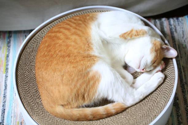Thinking cat picture id1056607960?b=1&k=6&m=1056607960&s=612x612&w=0&h=wbgesgp2bzzlrrazoqodwsjkll0z rku4vhgcwjrpgy=