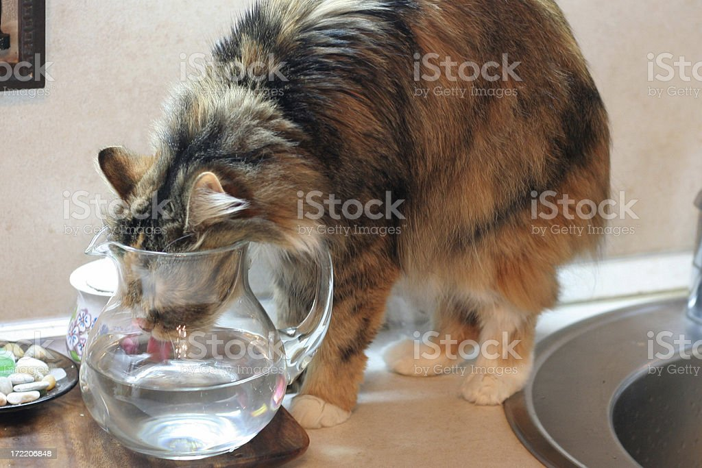 thirst royalty-free stock photo