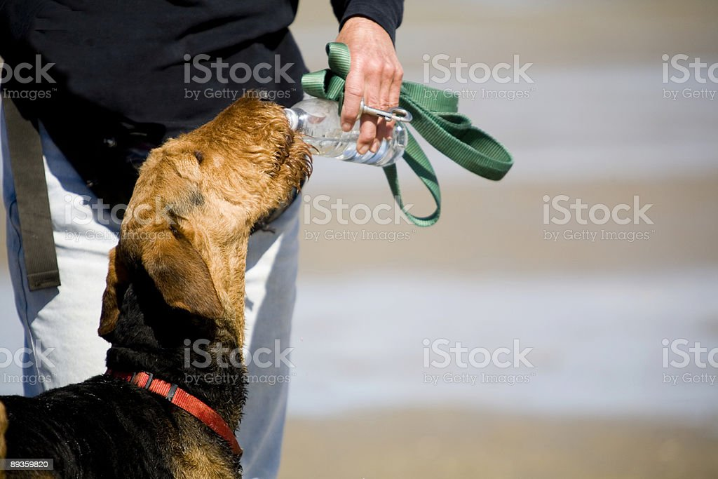 Thirsty Dawg royalty free stockfoto